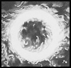 Sorin, Lord of Innistrad - letzter Beitrag von solring