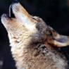 Keepsake Gorgon - letzter Beitrag von Nightwolf